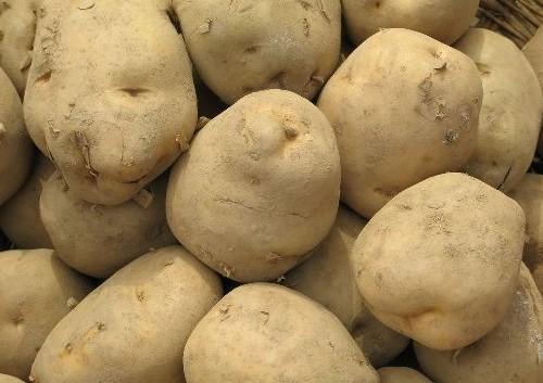 <b>汾西马铃薯</b>