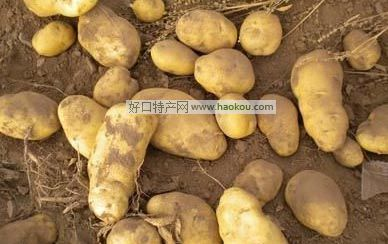 兴和马铃薯