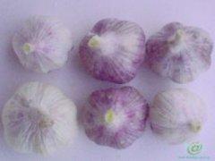 紫皮大蒜的吃法