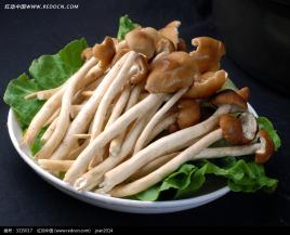 景宁茶树菇