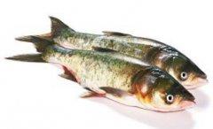 金寨花鲢鱼