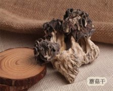巴楚胡杨蘑菇